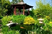 6160227-beautiful-japanese-garden-with-many-plant-pecies-and-water-pond-where-you-can-see-koi-fish_3.jpg